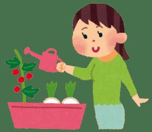 我が家の家庭菜園 夏野菜は終了か?